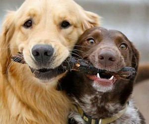 dogs, happy, and pic image