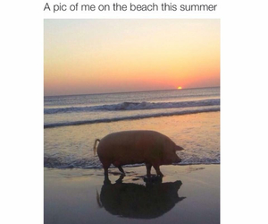funny, summer, and beach image