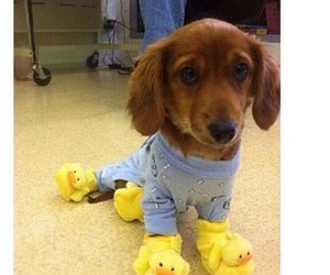 cute, dog, and duck image