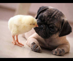 adorable, kisses, and animals image