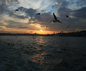 istanbul, sunset, and seagul image