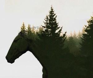 horse, horses, and лето image