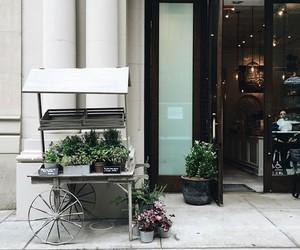 plants and shop image