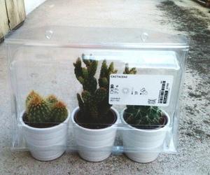 grunge, tumblr, and cactus image