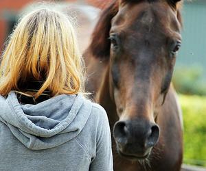 horse, cute, and beautiful image