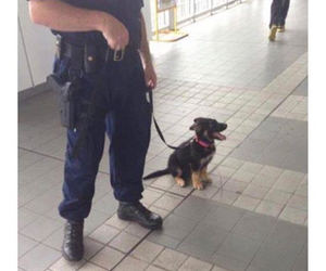 dog, police, and cute image