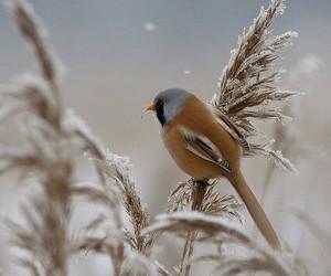 bird, snow, and nature image