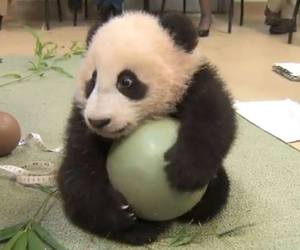 cute, fofo, and panda image