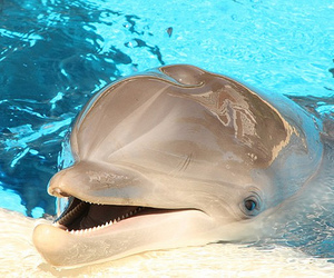 dolphin, cute, and animal image