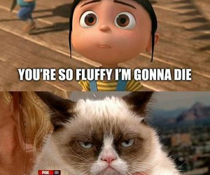 funny, cat, and fluffy image