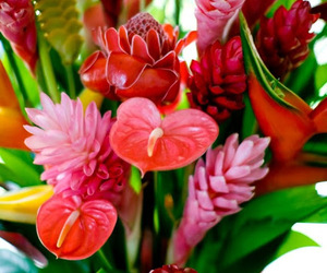 amazing, flowers, and martinique image