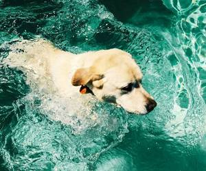 dog, swim, and animal image