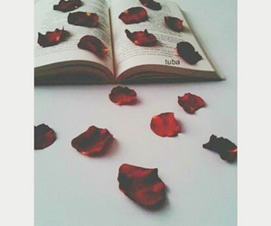 book, rose petals, and red image