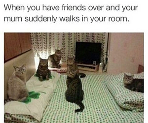funny, cat, and friends image