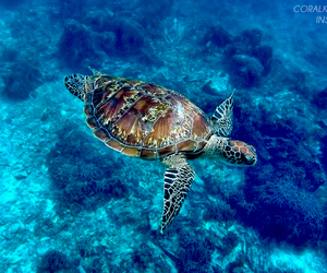 maui, underwater, and nature image