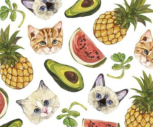 cat, fruit, and wallpaper image