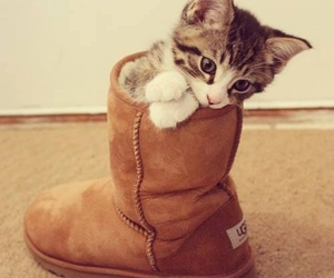 cat, cute, and ugg image