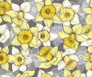 art, daffodil, and illustration image