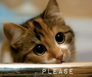 kitten, please, and sad eyes image