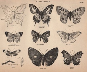 vintage, butterfly, and nature image