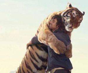 tiger, animal, and hug image