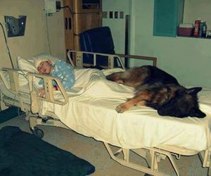 dogs, friend, and sincerity image
