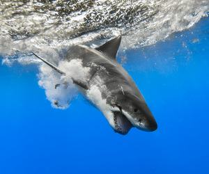 animals, blue, and breach image