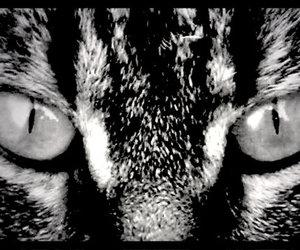 black & white, cat eyes, and cat image