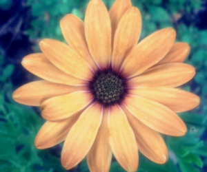 flower, fun, and summer image