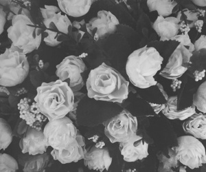 black and white, love, and roses image