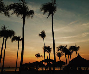 beach, colors, and palm trees image