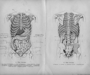 anatomy, body, and skeleton image