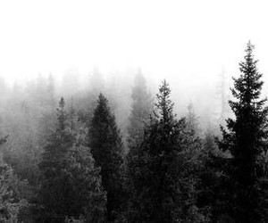 tree, forest, and black and white image