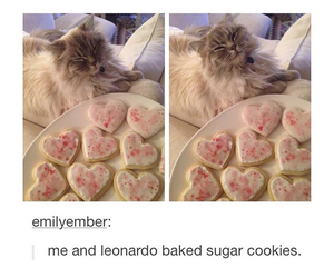 adorable, cats, and Cookies image