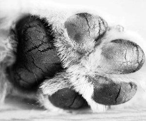 black and white, border collie, and hi five image