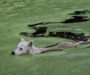 dog, nature, and water image
