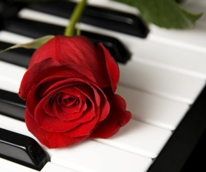 piano and rose image