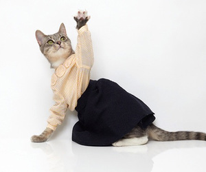 cat, clothes, and animal image