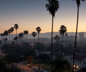 night, palms, and photography image