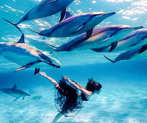 dolphin, ocean, and water image