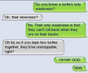 funny, turtles, and lol image