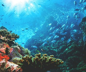 nature, ocean, and coral image