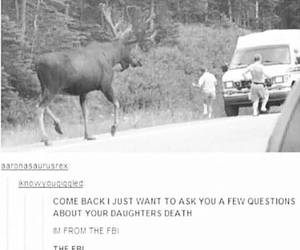 moose and supernatural image