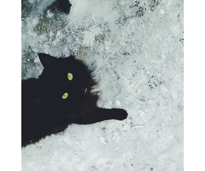 black, cat, and green image
