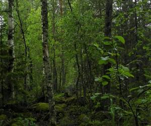 beautiful, dark, and finland image