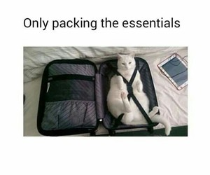 animals, baggage, and cats image