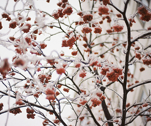 snow, flowers, and red image