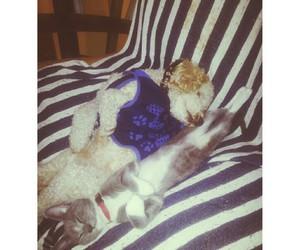 amigos, love, and catdog image