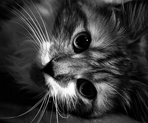 amazing, beauty, and black and white image