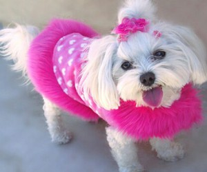 pink, dog, and puppy image